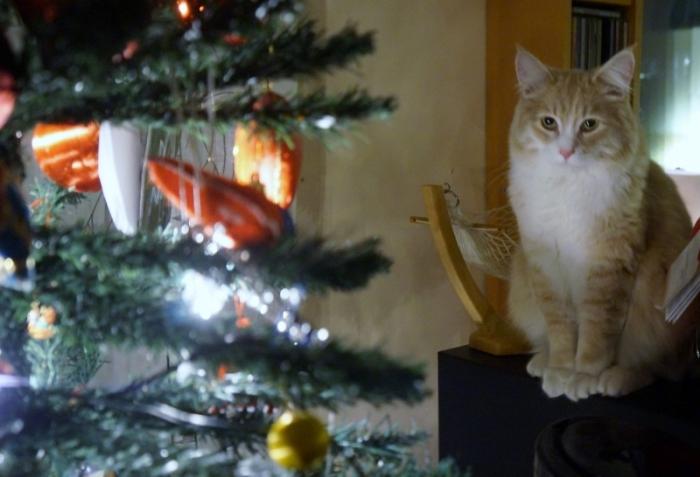 Katt och julgran