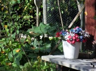 fysingen-blomkruka