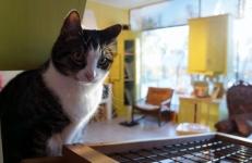 katt-lillskansen-skansen