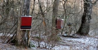 jarvafaltets-ornitologiska-klubb-fagelmatning