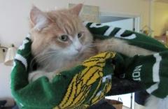 Katt, Hammarby fotboll